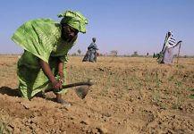 agriculturaTreballant El Terreny